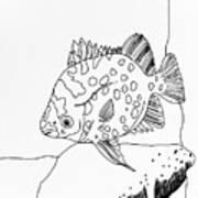Fish And Rock Art Print