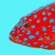 Fish Art - Strawberry Grouper Art Print