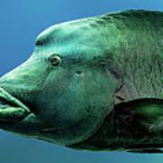 Fish Lips Art Print