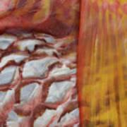 Fish Skin Art Print