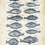 Fish Species Historiae Naturalis 08 - 1657 - 14 Art Print