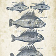 Fish Species Historiae Naturalis 08 - 1657 - 16 Art Print