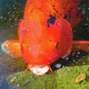 Fish Surprise Art Print
