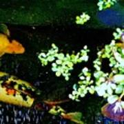 Fish Water Flowers 3 Art Print