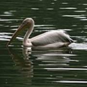 Fishing Pelican  Art Print