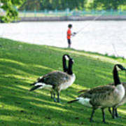 Fishing With The Geese Art Print