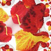 Five Autumn Leaves Art Print