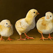 Five Chicks Named Moe Art Print