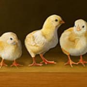 Five Chicks Named Moe Print by Bob Nolin