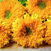 Five Exotic Sunflowers Art Print