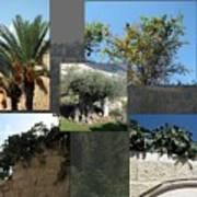 Five Fruit Of Israel Art Print