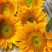 Five Moody Sunflowers Art Print