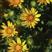 Five Yellow Flowers  Art Print