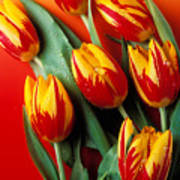 Flame Tulips Art Print by Garry Gay