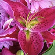 Flaming Tiger Lily Art Print
