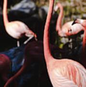 Flamingo 3 Art Print