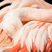 Flamingo Abstract Art Print