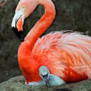 Flamingo And Baby Art Print