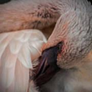 Flamingo Artful Pose Art Print