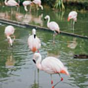 Flamingo Bath  Art Print