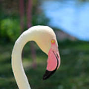 Flamingo Closeup Art Print