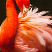 Flamingo Fluff Art Print