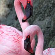 Flamingo Love Birds Art Print