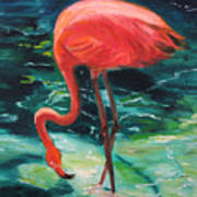 Flamingo Of Homasassa Art Print