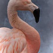 Flamingo Profile Art Print