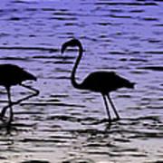Flamingo Walk - Venezuela Art Print