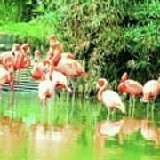 Flamingoes Art Print