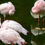 Flamingos 10 Art Print
