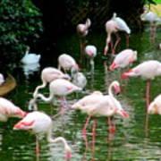 Flamingos 6 Art Print