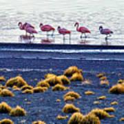 Flamingos At Torres Del Paine Art Print