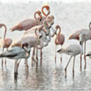 Flamingos Family Art Print