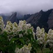 Flatirons White Lilacs Art Print