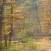 Fleeting Autumn Art Print