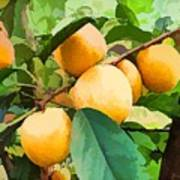 Fleshy Yellow Plums On The Branch Art Print
