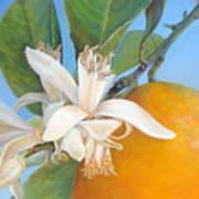 Fleurs d oranges Art Print