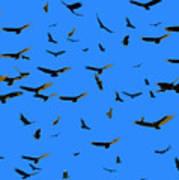 Flight Of The Vultures Art Print