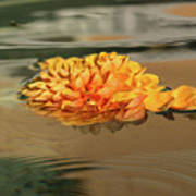 Floating Beauty - Hot Orange Chrysanthemum Blossom In A Silky Fountain Art Print