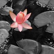 Floating Pink Art Print