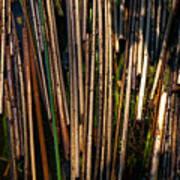 Floating Reeds Art Print