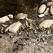 Flock Of Butterflies Panarama Art Print