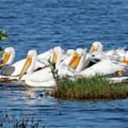 Flock Of White Pelicans Art Print