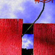 Flora And The Red Fence Art Print
