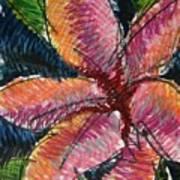 Flora Exotica 3 Art Print