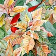 A Peachy Poinsettia Art Print