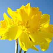 Floral Art Bright Yellow Daffodil Flowers Baslee Troutman Art Print