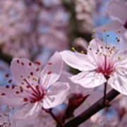 Floral Art Pink Spring Blossoms Prints Blue Sky Baslee Troutman Art Print